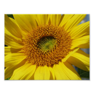 Bright & Cheerful Sunflower Close-up Poster