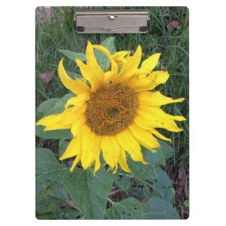 Bright Cheery Yellow Sunflower