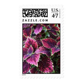 Bright Coleus Plants Postage