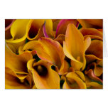 Bright colorful calla lilies at the card