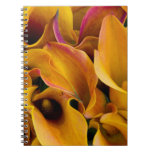 Bright colorful calla lilies at the spiral notebook