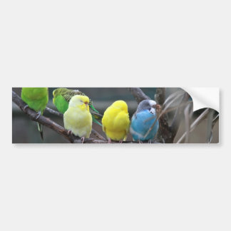 Bright Colorful Parakeets Budgies Parrots Birds Bumper Sticker