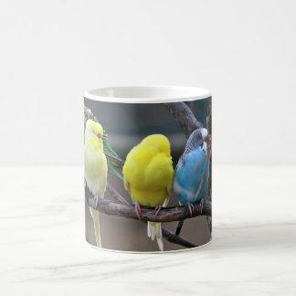 Bright Colorful Parakeets Budgies Parrots Birds Mug