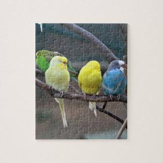 Bright Colorful Parakeets Budgies Parrots Birds Puzzle