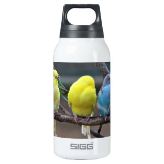 Bright Colorful Parakeets Budgies Parrots Birds 10 Oz Insulated SIGG Thermos Water Bottle