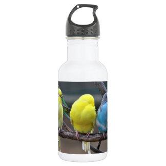 Bright Colorful Parakeets Budgies Parrots Birds Water Bottle