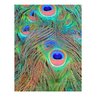 Bright Colorful Peacock Feathers Letterhead
