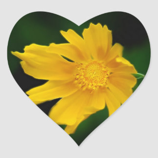 Bright Coreopsis flower and meaning Heart Sticker