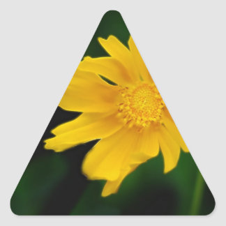 Bright Coreopsis flower and meaning Triangle Sticker