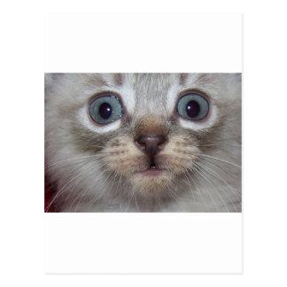 Bright Eyed Kitten.jpg Postcard