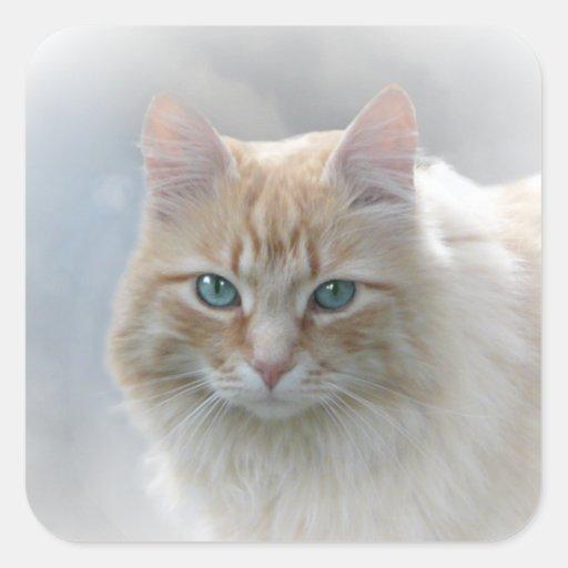 Bright Eyes cat sticker