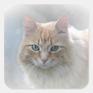 Bright Eyes square cat sticker © AH2010
