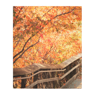 Bright fall colors along wood walk way metal print
