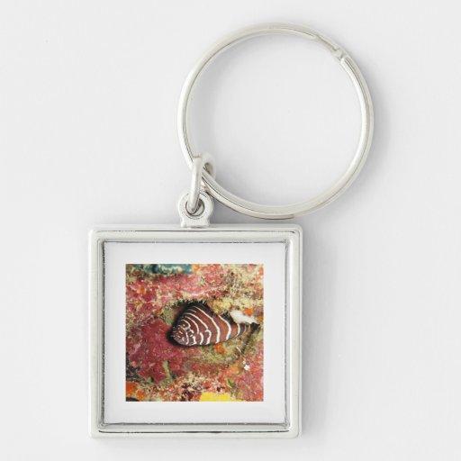 bright fish Silver-Colored square keychain