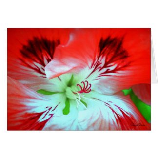Bright Flower Detail - Red and White Petals Card