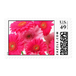 Bright Gerbera Daisy Cluster Postage