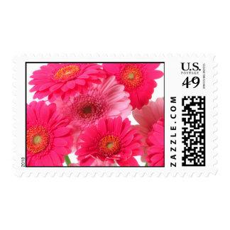 Bright Gerbera Daisy Cluster Postage