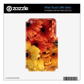 Bright Gerbera Flowers, Orange Yellow, Flora iPod Touch 4G Decal