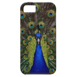 Bright girly pretty peacock bird nature animal iPhone 5 cases