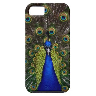 Bright girly pretty peacock bird nature photograph iphone 5 cover