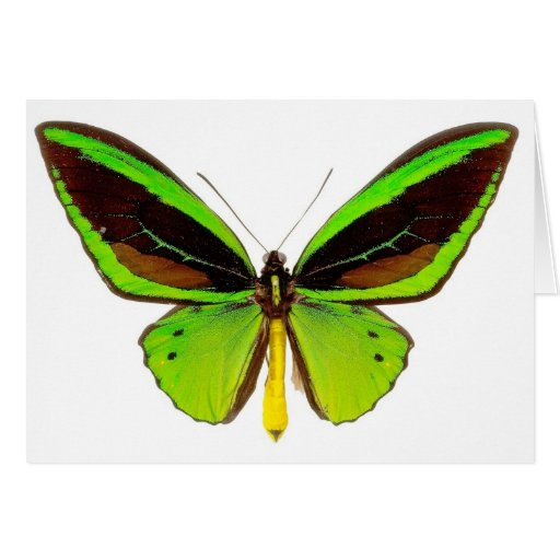 Bright Green Butterfly Greeting Card