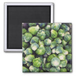 Bright Green Fresh Brussels Sprouts 2 Inch Square Magnet
