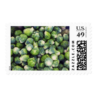 Bright Green Fresh Brussels Sprouts Stamp
