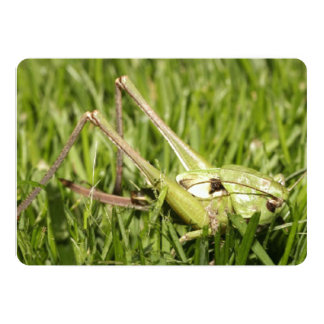 Bright Green Grasshopper Card