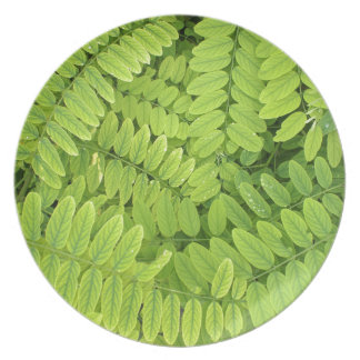 Bright green leaves and small acacia with dew drop melamine plate