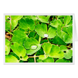 Bright Green Leaves with Raindrops Card