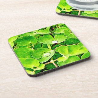 Bright Green Leaves with Raindrops Coaster