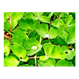 Bright Green Leaves with Raindrops Postcard