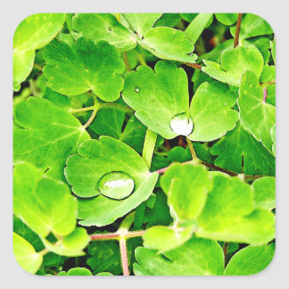 Bright Green Leaves with Raindrops Square Sticker