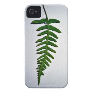 Bright green Palm leaf isolated on white backgroun Case-Mate iPhone 4 Cases