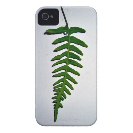 Bright green Palm leaf isolated on white backgroun Blackberry Bold Cases