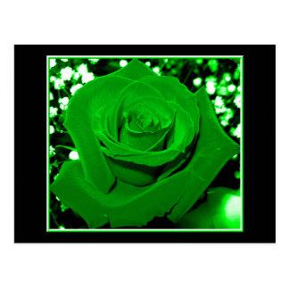 Bright Green Roses Postcard