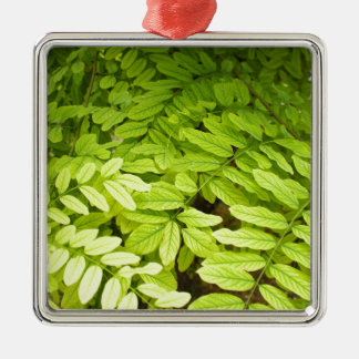 Bright, green, small, oval leaves of acacia metal ornament