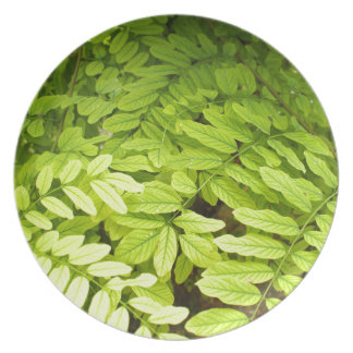 Bright, green, small, oval leaves of acacia plate