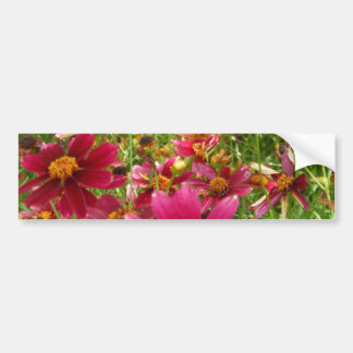 Bright Hot Pink and Yellow Daisy flowers Bumper Sticker