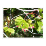 Bright Leaves -CO Postcards