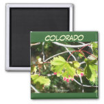 Bright Leaves -CO Refrigerator Magnets