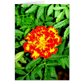Bright Marigold Card