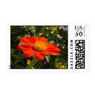 Bright Orange Blossom Flower Postage