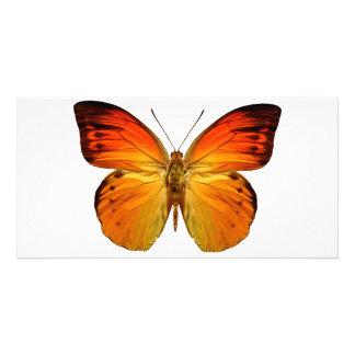 Bright Orange Butterfly Card