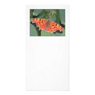 Bright orange butterfly. Comma. Card