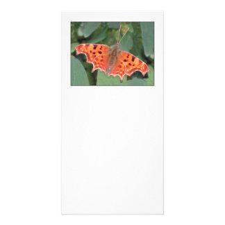 Bright orange butterfly. Comma. Card