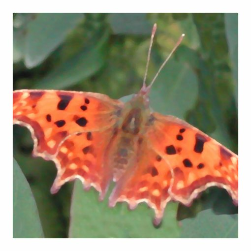 Bright orange butterfly. Comma. Standing Photo Sculpture