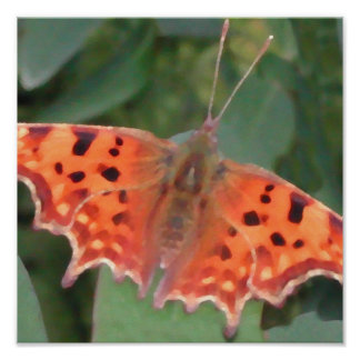 Bright orange butterfly. Comma. Poster
