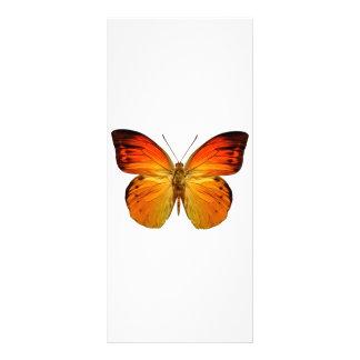 Bright Orange Butterfly Rack Card