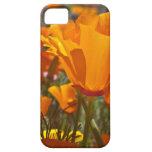 Bright orange california poppies iPhone 5 case